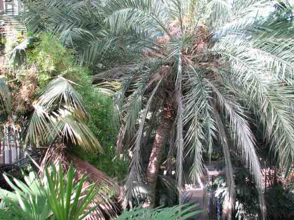 Palm tree in the conservatory at the Barbican, London
