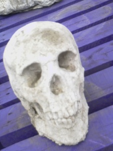 Skull in stone - garden ornament